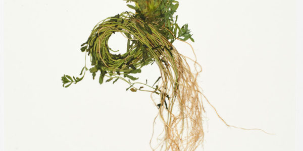 John Newling Dear Nature 2018 4