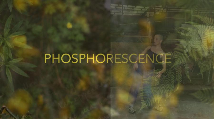 Phos Festival Alt 3 01