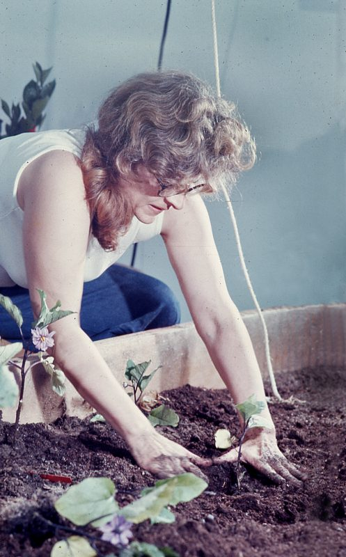 Helen Planting Reduced